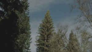 Fák és az égbolt